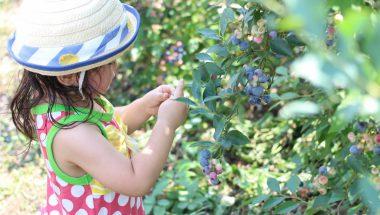 """7月26日(木)多摩で収穫!ブルーベリー・ミントの摘みとり体験と""""デザートベーグル""""づくり"""
