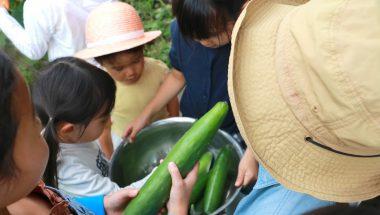 多摩で収穫!トマトとキュウリ狩り体験とベーグルづくり 開催しました!